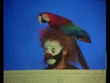Лейкин и попугай